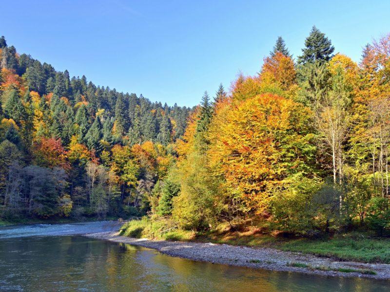 rzeka Dunajec Spływ Kajakowy Jesień
