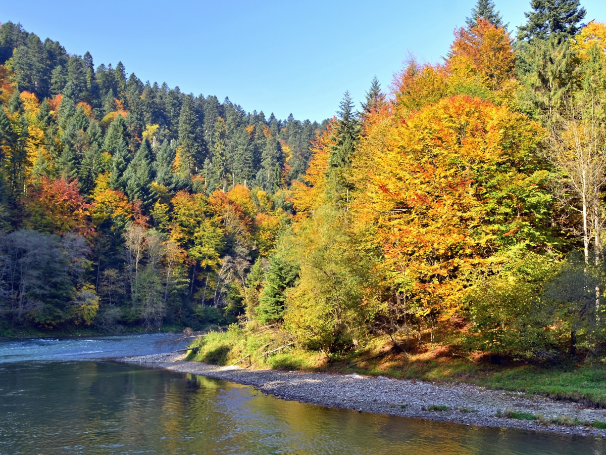 Dunajec river - kayaks in the autumn